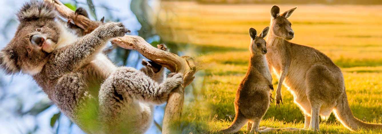 تصویر بنر سازمان حفاظت حیاتوحش چهکاری انجام میدهد