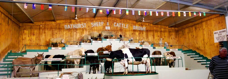 نمایشگاه گاو و گوسفند باتورست