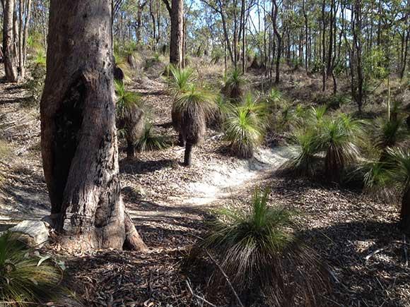 پوشش گیاهی جنگل توهی استرالیا