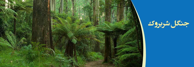 جنگل شربروک ملبورن